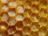 193px-Bienenwabe_mit_Eiern_und_Brut_5