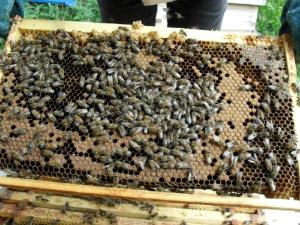 Bee hive - thumb