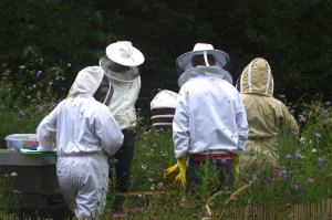 Beekeepers in a meadow - thumb