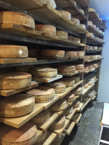 Cheese maturing in the cave - thumb