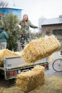 Offloading bales - thumb