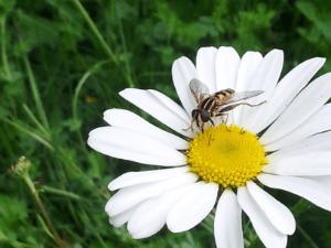 bee on flower - thumb