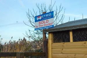 Sold to the Ducks - Surrey Docks Farm - thumb